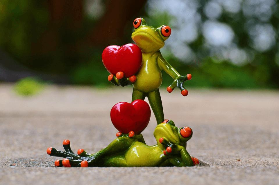 Sepasang katak memegang hati