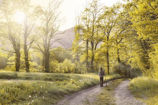 Man with a cane walking in a path in a green forest