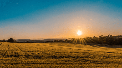 View of the sunrise on a brown grass field