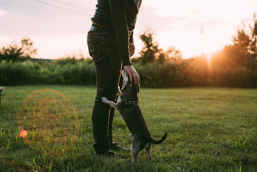 A person standing while petting his dog a grass field